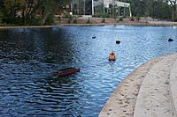 Name: 120826 duck pond.jpg
