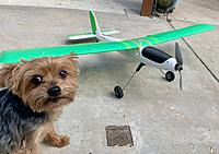 Name: dogandplane.jpg Views: 30 Size: 2.12 MB Description: