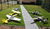 Name: fleet2011crop.jpg Views: 167 Size: 197.4 KB Description: Fleet as pictured in my garden during summer 2011