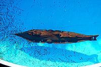 Name: IMG_4698s.jpg Views: 113 Size: 133.9 KB Description: Submerged