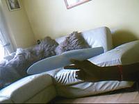 Name: Raptor Fuse Plug..0001.jpg Views: 59 Size: 11.4 KB Description: