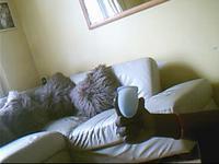 Name: Raptor Fuse Plug..0002.jpg Views: 55 Size: 11.0 KB Description: Nice Lines Eh?.