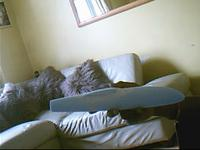 Name: Raptor Fuse Plug..0004.jpg Views: 59 Size: 10.7 KB Description: