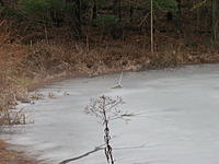 Name: IMG_1408.jpg Views: 38 Size: 223.0 KB Description: There she is...  on the ice.  Thin ice.