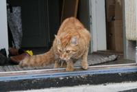 Name: IMG_9878.jpg