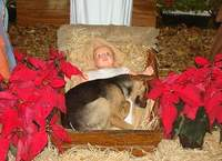 Name: Christmas Dog.jpg Views: 875 Size: 41.4 KB Description: