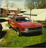 Name: Mustang_70.jpg