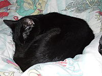 Name: DSCF4347.jpg