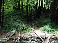 Name: Forest.jpg Views: 178 Size: 318.5 KB Description: Forest in Limekiln State park. Wow!