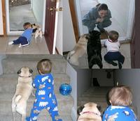 Name: Pugs_n_Todd.JPG