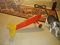 """Name: tbolt onitswheels3-21-19 (2).jpg Views: 36 Size: 1.74 MB Description: The tubby plane and His Majesty compare sizes - that plane is a bit taller than """" HM"""" .  Laundry and Kat lounge in the background....."""