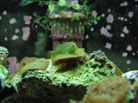 Name: aquarium-09.jpg Views: 426 Size: 81.9 KB Description: