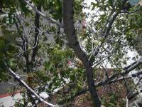 Name: Tree1sm.jpg Views: 285 Size: 194.6 KB Description:
