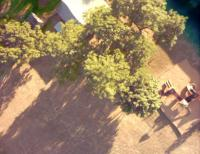 Name: trees bordering my flying area.jpg