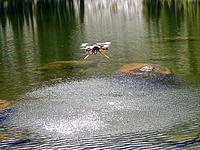 Name: Bombi_Frankpix_00 (12).jpg