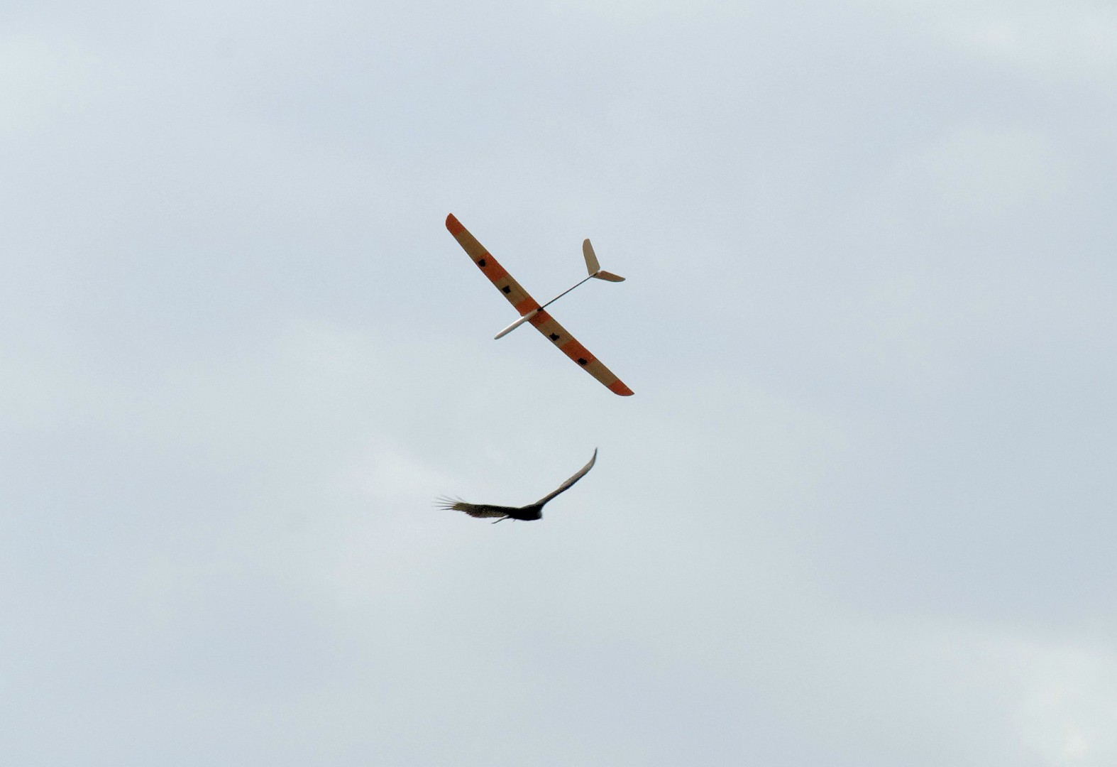 Name: DSC_4980_DxO.jpg