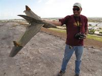 Name: IMG_1493 (Large).jpg