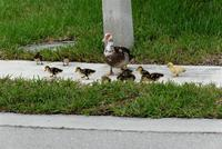 Name: DSC_0233_DxO_raw (Large).jpg
