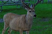 Name: DSC_0862_DxO_raw (Large).jpg
