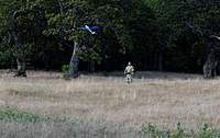 Name: DSC_5167_DxO.jpg Views: 135 Size: 95.8 KB Description: Test flight for Trees.