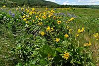 Name: DSC_8078_DxO.jpg Views: 98 Size: 299.5 KB Description: Some wild flowers along the wayside.