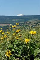 Name: DSC_8187_DxO.jpg