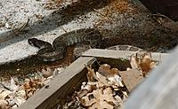 Name: DSC_8438_DxO.jpg