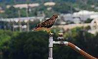 Name: DSC_9369_DxO (Custom).jpg