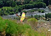 Name: DSC_2463_DxO (Custom).jpg Views: 95 Size: 129.4 KB Description: Tom's Gulp on landing.