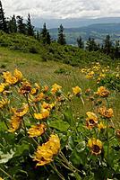 Name: DSC_2709_DxO (Custom).jpg Views: 106 Size: 129.1 KB Description: Flowers were out in full bloom.