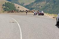 Name: DSC_0549_DxO.jpg Views: 73 Size: 297.2 KB Description: Tom lands his Gulp on the road.