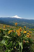 Name: DSC_0738_DxO.jpg Views: 74 Size: 149.7 KB Description: Obligatory flower and Mount Hood pic.