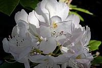 Name: DSC_1444_DxO.jpg Views: 86 Size: 90.4 KB Description: Some pretty flowers in the motel parking lot.