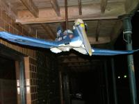 Name: realwarbird02.jpg