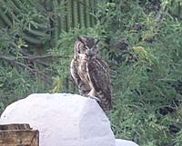 Name: Owl.jpg Views: 49 Size: 76.8 KB Description: