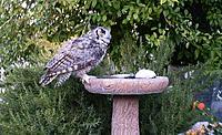 Name: Owl on Birdbath 1.jpg Views: 42 Size: 79.2 KB Description: