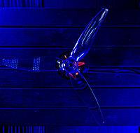Name: BLUE.jpg Views: 207 Size: 250.6 KB Description: BLUE