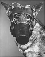 Name: dog gasmask2.jpeg
