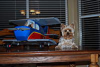Name: SkyBaby & Bella.jpg