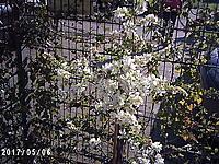 Name: PICT0022.jpg Views: 1965 Size: 1.23 MB Description: