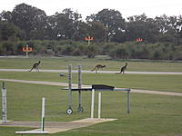 Name: DSCN0205.jpg