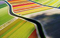 Name: The tulip fields in Holland.jpg Views: 79 Size: 263.1 KB Description: