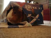 Name: DSC02656.jpg