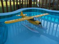 Name: cub.jpg