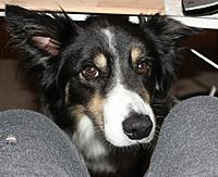 Name: 14.jpg Views: 7 Size: 240.1 KB Description: Doggy helper.