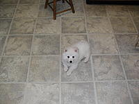 Name: kiska 3.jpg Views: 75 Size: 59.7 KB Description: Kiska is a wuss, at present anyway---.
