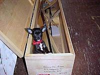 Name: bruce-dog.jpg Views: 600 Size: 61.7 KB Description: