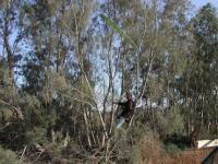 Name: tree.jpg Views: 475 Size: 95.5 KB Description: