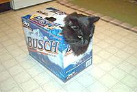 Name: Redneck_Cat_Carrier[2].jpg Views: 29 Size: 78.3 KB Description: