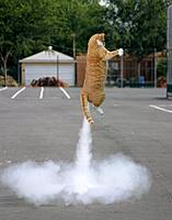 Name: flying-cat.jpg